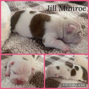 Jill_Munroe