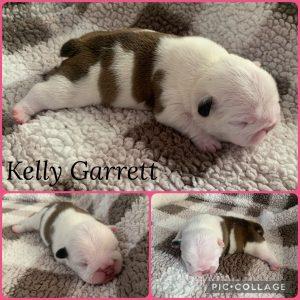 Kelly_Garret